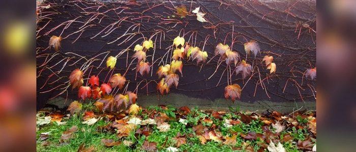 Jesensko listje